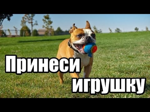 Как научить собаку приносить предметы