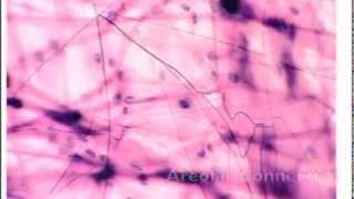 Tissue Flash Cards -- Anatomy & Physiology
