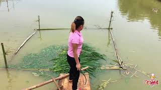 九妹土法钓鱼,只用一根草,一刻钟后,5斤重草鱼便到手,男人都佩服!