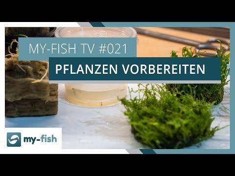 Pflanzen richtig vorbereiten | my-fish TV