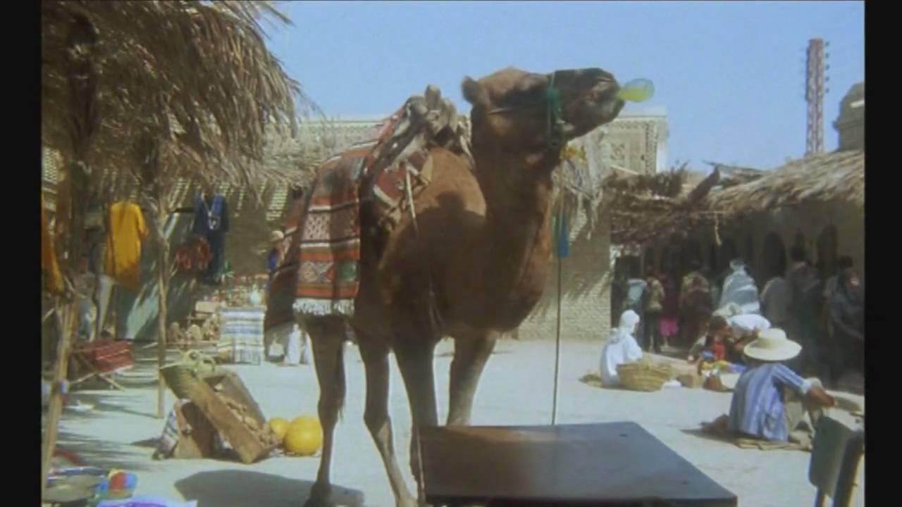 zwei kamele auf einem pferd