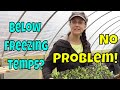 Unheated Greenhouse Troubles Our Solution mp3