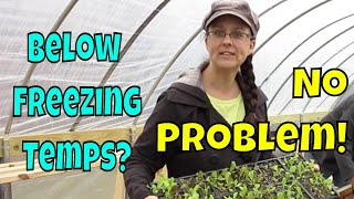 Unheated Greenhouse Troubles.  Our Solution!