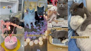 果冻是只可爱猫 | #土豆猫 #奶茶 | 果冻成长过程 2 :  真想不到从小小的黑不溜秋的果冻到现在它已经是三个孩子的爸爸了太奇妙了。果冻你要幸福哦。。 #铲屎官 #萌宠 #猫 #小奶猫