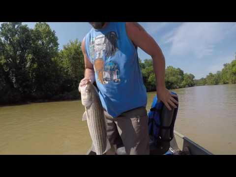 Lower Illinois River Striper Fishing Vol 1