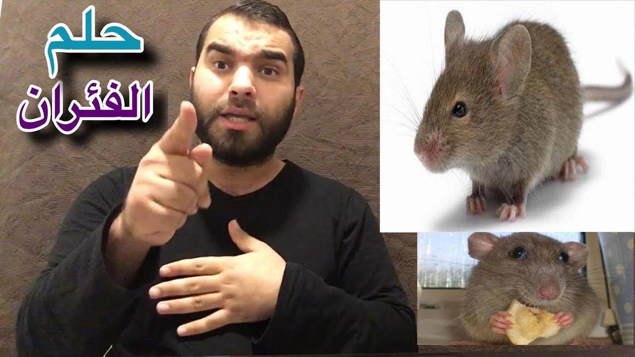 تفسير رؤية الفأر في المنام لابن سيرين مفسر