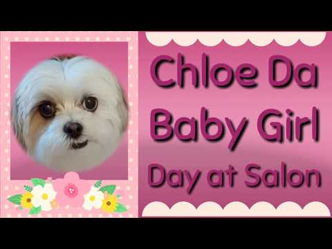 Chloe Da Baby Girl | Funny Dog Video! | Try not to Laugh!