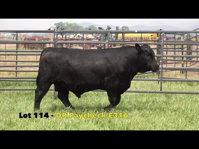 Black Gold Bull Sale Lot 114