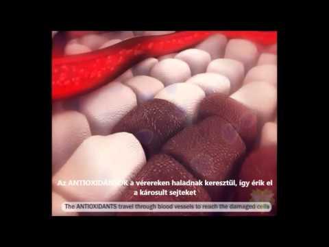 Antioxidans mukodese