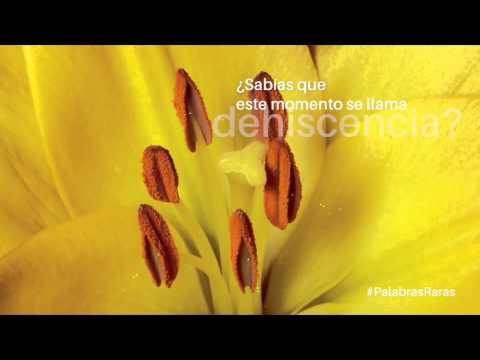 �Qu� se entiende por dehiscencia - Palabras raras - ATREVIA