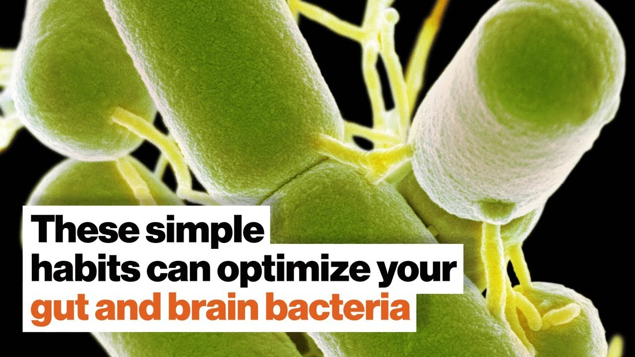Download How to optimize your gut and brain bacteria | Dave Asprey | Big Think