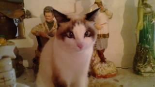 Видео: Косоглазая кошка сидит на печке