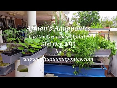 Affnan's Aquaponics - Gutter Growbed Aquaponics Update 31st Oct 2015