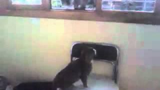 2 Кошки загнали кота в угол