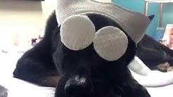 Canine Academy-Pure Envy Salon & Medi Spa
