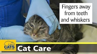 How to give your cat a pill by hand
