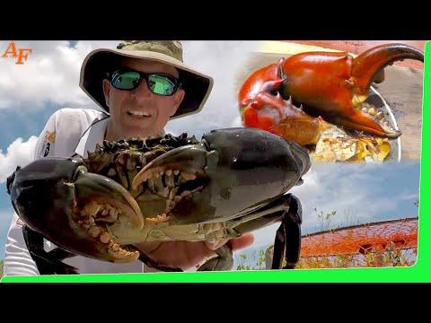 Mud Crabs With Barramundi Catch N Cook Smoker In Bush Kitchen EP.428