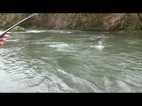 Collins Lake Trout & Oregon Coast Steelhead Fishing With Plugs & Spoons.
