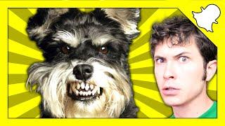FUNNY DOG REACTION (AMAZING Snapchat Compilation #16)
