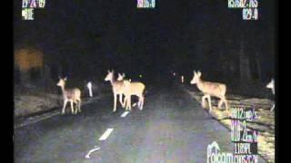 Zwierzęta na drodze