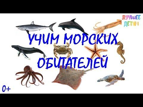 Морские обитатели. Учим морских обитателей для детей на русском / Лучшее детям