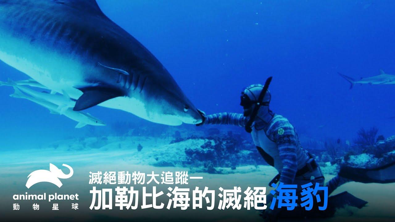 從鯊魚糞便找海豹?危險動作千萬不可模仿!|動物星球頻道 - YouTube