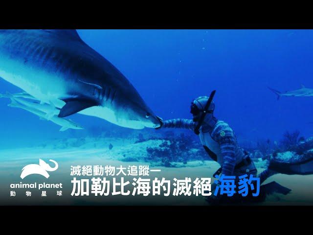 從鯊魚糞便找海豹?危險動作千萬不可模仿! 動物星球頻道