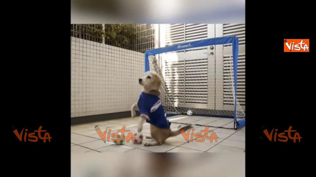 Questo Cucciolo Di Beagle Para Tutto Sarà Il Nuovo Buffon Youtube