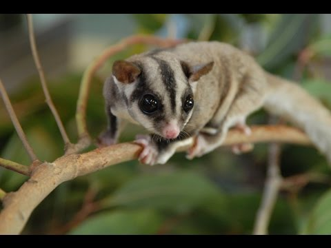 Top 10 - Exotic animals you can own as pets