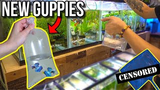 Buying GUPPIES For My GUPPY FISH BREEDING POND! *GONE WRONG*