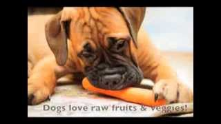 Natural Healthy Dog Food: 5 Tips To Overcoming Picky Eating Habits