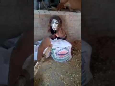 Buhta WS tagged videos | Midnight News