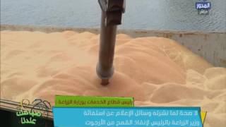 """فيديو..مسئول بالزراعة يكشف حقيقة الاستغاثة بالسيسى لانقاذ مصر من """"قمح الارجوت"""""""