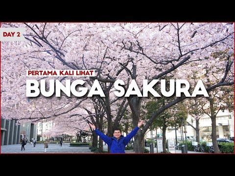 norak-!-pengalaman-pertama-liat-bunga-sakura-,-shinjuku-gyoen---tokyo-/-vlog-jepang-hari-2--awi