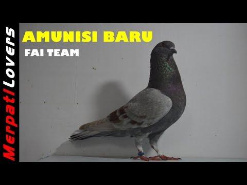 AMUNISI TERBARU Team FAI Brebes Pengganti SANG JENDRAL Yang Sedang Istirahat