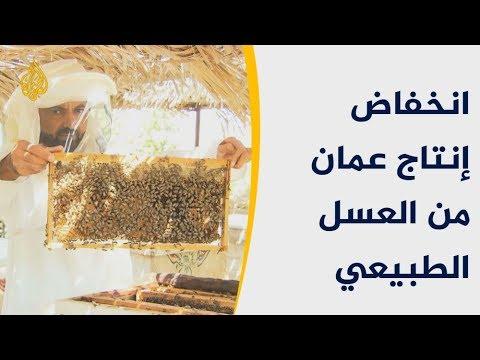 معارض العسل الطبيعي بعُمان.. ملجأ العاملين بعد تراجع الإنتاج  - 12:54-2019 / 1 / 2