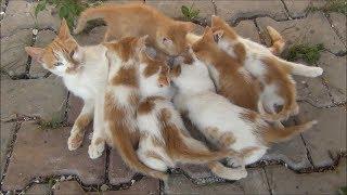 Milk station for kittens
