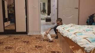 Даня и Дёма играют с чихуахуа. / Видео
