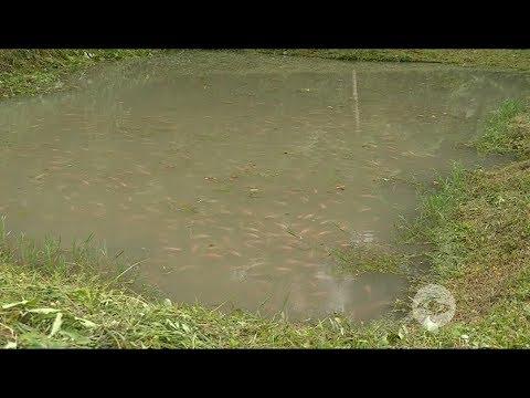 Cómo Obtener Calidad De Agua En Cultivos De Tilapia Roja
