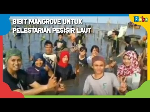 bibit-mangrove-untuk-pelestarian-pesisir-laut