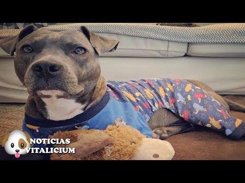 Este perro no puede salir a la calle sin su pijama, la razón es conmovedora