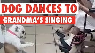Granny And Her Dog Have An Amazing Time Dancing Together