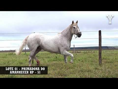 LOTE   01 PRIMADONA DO AMANHECER RP   51