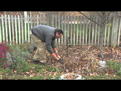 Preparing Your Garden for Winter – A Meijer Gardens Gardening Demonstration
