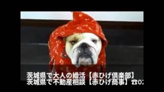 茨城県で大人の婚活【赤ひげ倶楽部】 40才以上からシニアまで。または再...