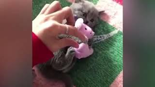 Коты атакуют