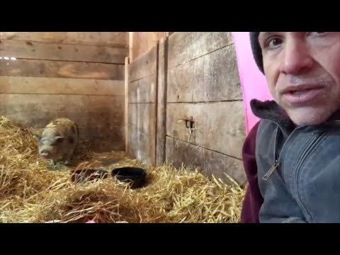 This pig spent 10 years in dark stall. Watch how she responds to love.