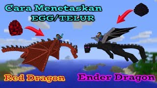√No Mods! Cara Menetaskan Telur Naga (Dragon) Minecraft Pocket Edition (MCPE)