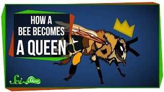 Facts About A Queen Bees Life Cycle