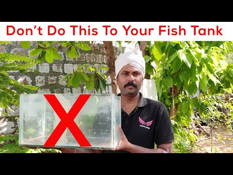 Top 5 Mistakes On Setting Up A Fish Tank - Don't Do This To Your Fish Tank